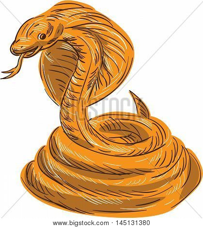 Drawing sketch style illustration of a cobra viper snake serpent coiled set on isolated white background.