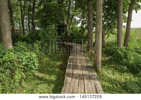 Wooden  Trail To The Forest