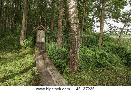 Wooden  Trail To The Wc