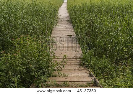 The Trail Near The Reed In Lake