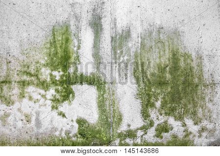 Mold on the wall of an underground.