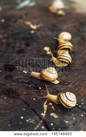 Yellow Snails Walking Around The Garden. Snail On The Tree In Th
