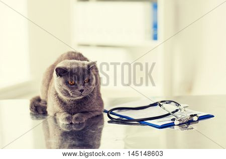 medicine, pets, animals and health care concept - close up of british cat and stethoscope with clipboard on table at vet clinic