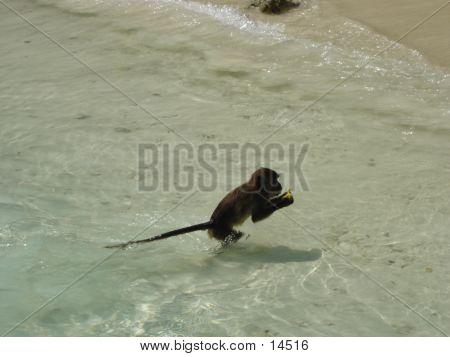 Monkey Beach In Thailand