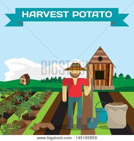 Man harvesting potato in a field in the village. Manual labor shovel bucket sack bush potatoes rural view. Cartoon flat vector illustration