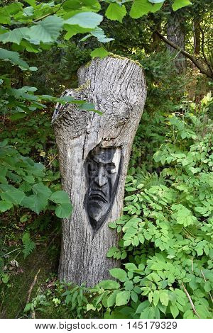 Face carved in wood. Face carved into a tree