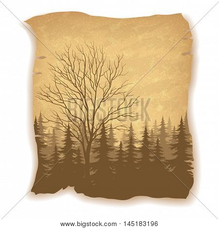 Landscape, Deciduous and Coniferous Fir Trees Silhouettes on Vintage Background of an Old Sheet of Paper. Eps10, Contains Transparencies. Vector