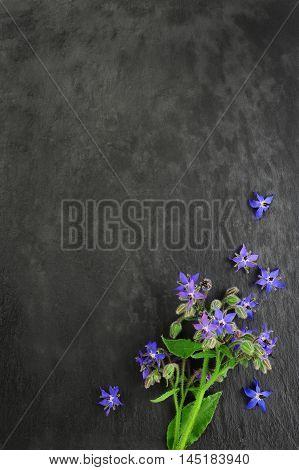 borage over over dark slate board background