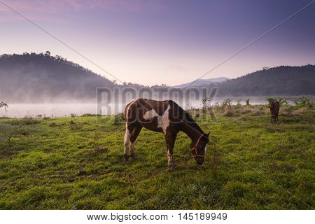 Movement, White and brown horses pasturing in the countryside at sunset