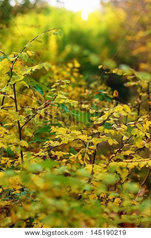 Autumn bushes with bright leaves on blurred background