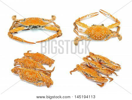 Hot Steam Crab Seafood Collection