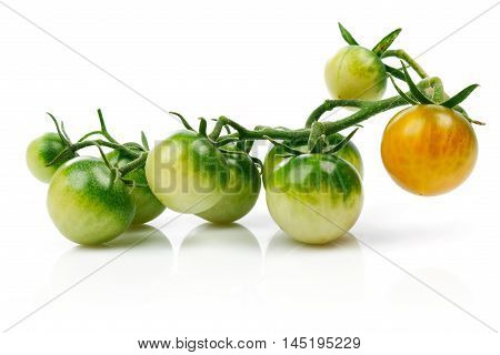 Cluster green cherry tomato at branch isolated on white background