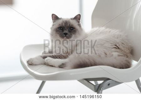 Lovely Cat Relaxing On The Chair