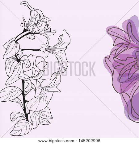 Decorative Viola Flowers