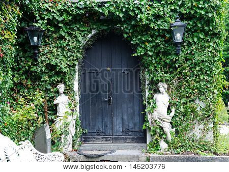 Black wooden gate covered with green leaves ivy