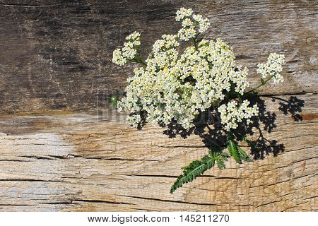 White yarrow flowers on the wooden background