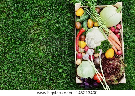 Wooden box with a crop of vegetables and harvest of root on the background of the grass top view. Natural and organic food.