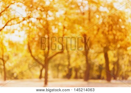 Yellow autumn trees out of focus. Abstract bokeh backdrop. Natural blurred background of fall park or garden.