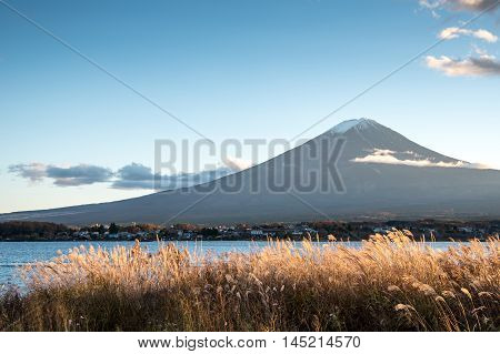 Beautiful view of Mount Fuji and field at Lake Kawaguchi in autumn This mountain is an famous place of Japan