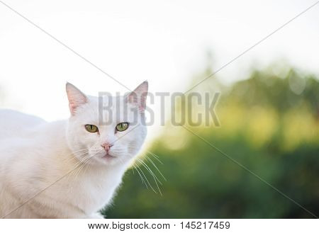 White cat with green eyes looking towards camera