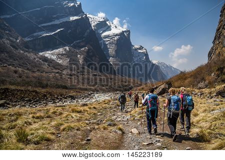 POKHARA NEPAL - APRIL 13 2016 : Mountaineers walk among beautiful mountain landscape on Annapurna Sanctaury route Nepal.