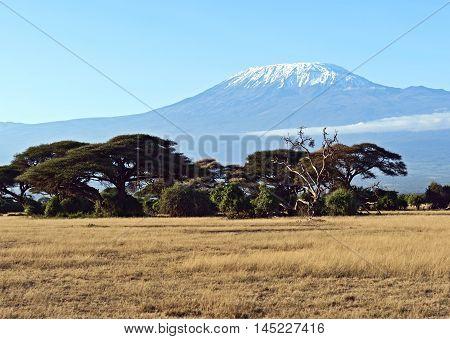 African Savanna In Kenya