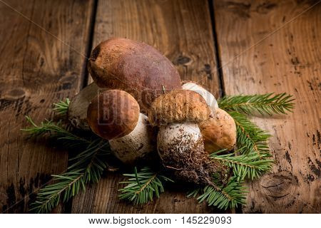 cep edible mushroom