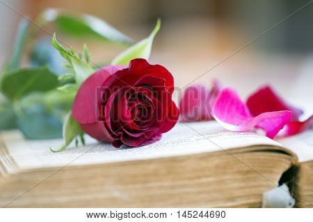 Red rose and petals on a book