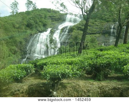 Waterfall In Tea Garden