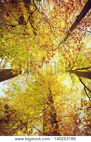 Looking Up Into Trees With Wide Angle.