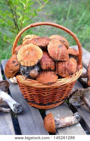 Still life with many edible mushrooms  in brown wicker basket on wooden table closeup wooden table. Front view outdoors vertical against green grass