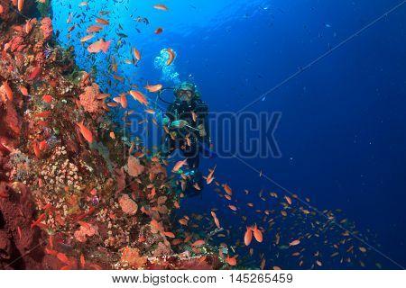 Scuba dive coral reef in Komodo, Indonesia