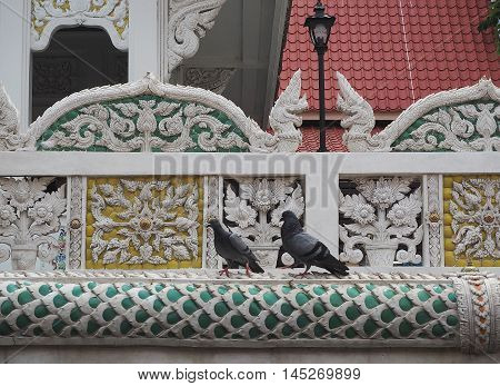 two pigeon bird  side a decorate wall.
