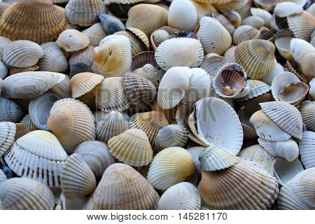 Tiny sea shell and snail texture background.