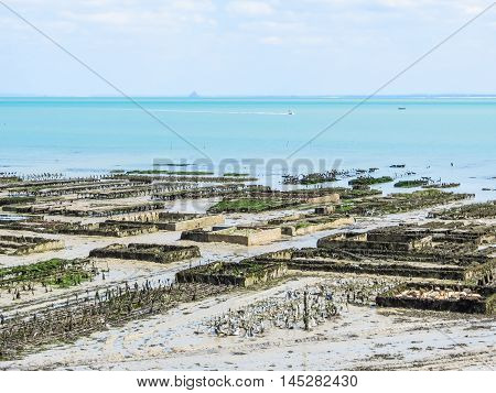 Oyster farms with growing oysters in lowtide, Cancale, France