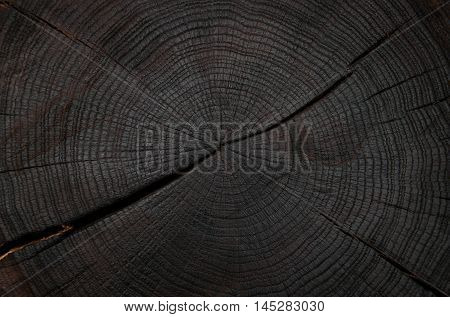felling trees with cracks painted in black