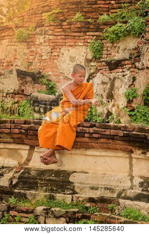 Young Buddhist novice monk reading and playing with a cat