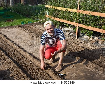 Spring Works In The Garden. Sowing Vegetable Crops
