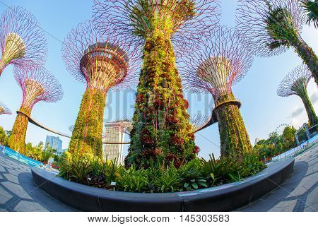 The Super Tree Grove at Gardens by the Bay in Singapore. Spanning 101 hectares and five-minute walk from Bayfront MRT Station.