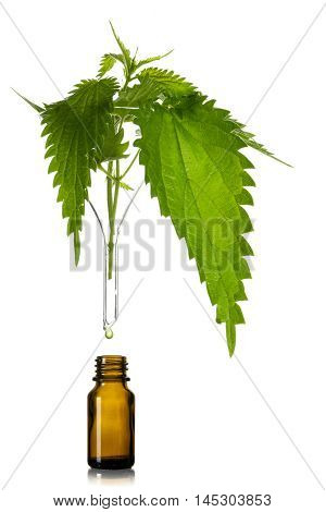 stinging nettle leaves in a glass funnel above a brown pharmacy bottle medicinal herb for tincture essence or tea isolated on a white background