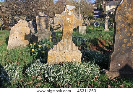 Snowdrops in a graveyard in the Spring