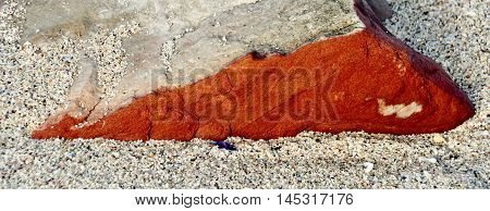 Close up of iron red Sandstone on beach sand