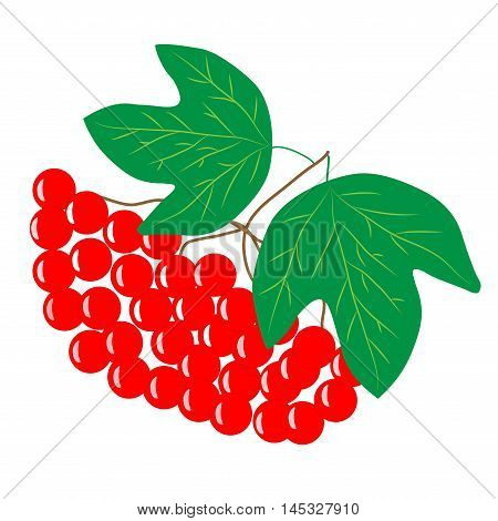 Viburnum cartoon sign. Isolated bunch red berry on white background. Sumbol health. Bright bush guelder rose. Flat vector image. Vector illustration