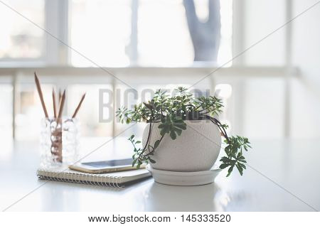 Home plant, business notepad and smartphone on the table in a backlight with copy space