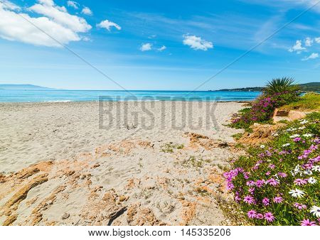 flowers by the sea in Le Bombarde beach Sardinia