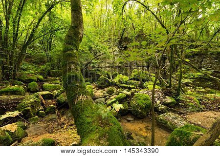 Green undergrowth with moss and water. Torrente del tasso (creek of the rate) Pazzon Caprino Veronese Verona Italy