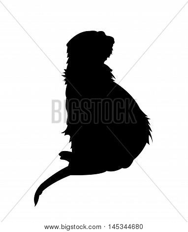 Rear View of Sitting Meerkat Silhouette on White Background. Isolated vector illustration animal theme.