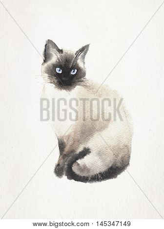 Watercolor and pen drawing of a Siamese cat on a vintage background