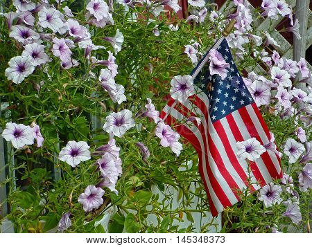 American flag surrounded by colorful purple wildflowers