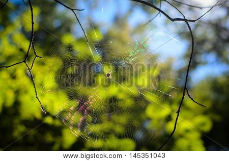Spider web with the spider back lit by the sun. The photo in the woods.